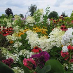 Фестиваль цветов на Биолите.